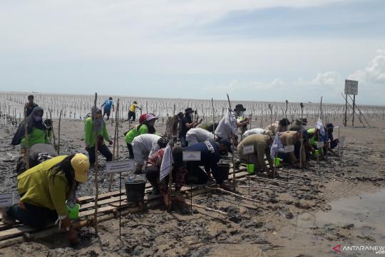 Jaga ekosistem pantai, BPDAS Babel intensifkan rehabilitasi mangrove