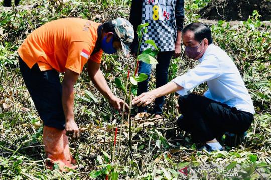 Presiden Jokowi tanam mangrove di Cilacap antisipasi perubahan iklim