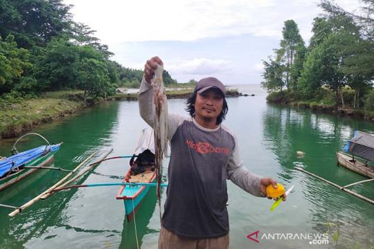 Simeulue ekspor 15 ton gurita ke Jepang