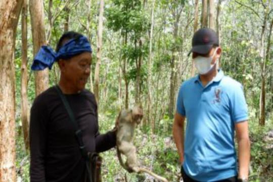 BKSD Yogyakarta gandeng Suku Badui tangkap kera di Gunung Kidul