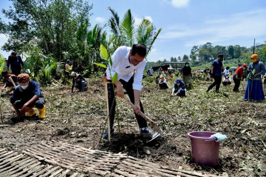 Presiden: Tanam mangrove untuk pemulihan lingkungan dan mitigasi iklim