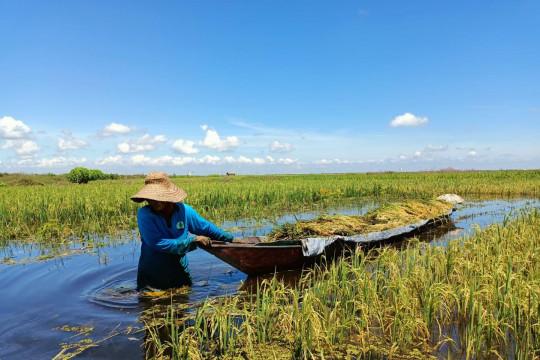 BRGM cetak petani inovatif olah lahan gambut berkelanjutan