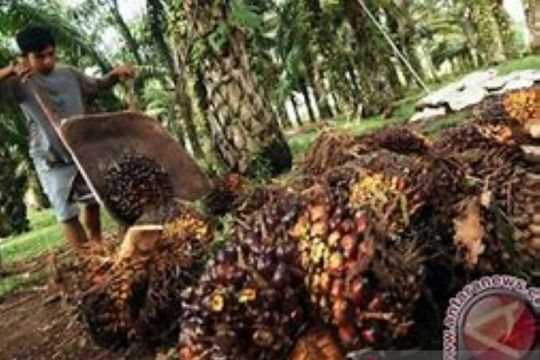 Disbun Riau percepat peremajaan 26.500 hektare lahan sawit rakyat