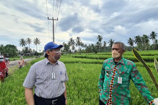 KSP kawal produksi padi biofortifikasi di Provinsi Lampung