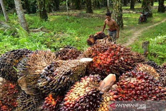PGRI dorong edukasi mitos-fakta kelapa sawit kepada siswa
