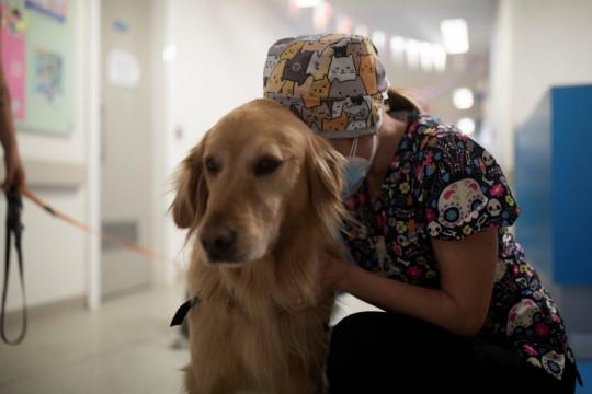 Pepe dan Chimu anjing pendamping, beri keceriaan di Rumah Sakit Chili