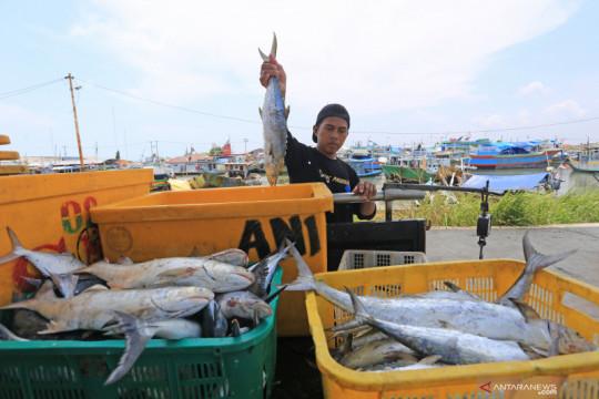 Kiara: Pembatasan tangkap ikan harusnya hanya untuk industri besar