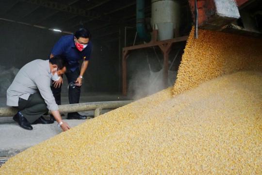Mentan pastikan pasokan jagung ke perusahaan pakan berjalan normal