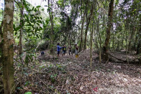 Hutan Desa Bukit Bamba berpotensi sebagai hutan penelitian