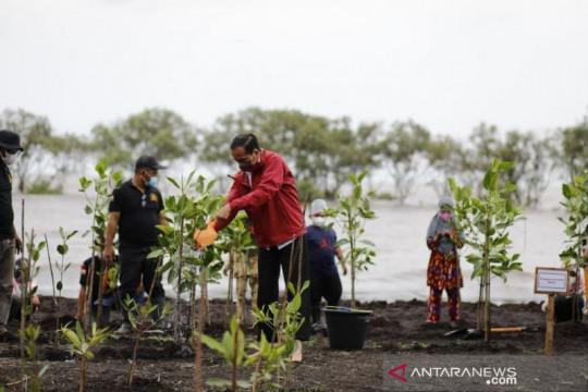 Presiden Jokowi tanam mangrove di pulau terdepan Bengkalis