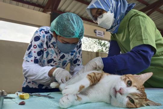 Balai Karantina Pertanian Palangka Raya gelar vaksinasi rabies gratis