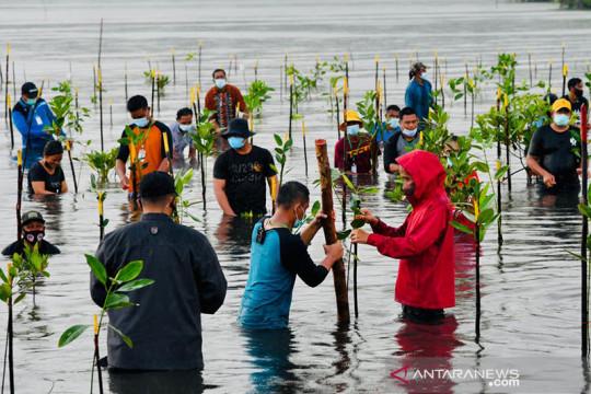 "Presiden Jokowi ikut ""nyebur"" tanam bakau bersama warga"
