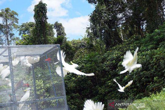 Pelepasliaran satwa endemik Papua Barat