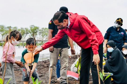 Kendalikan abrasi, Presiden Jokowi tanam mangrove di pulau terdepan Bengkalis