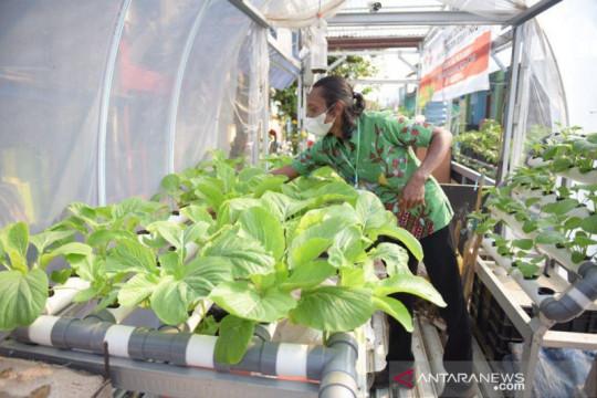 "Pemerintah dorong ""urban farming"" jadi kawasan agrowisata"