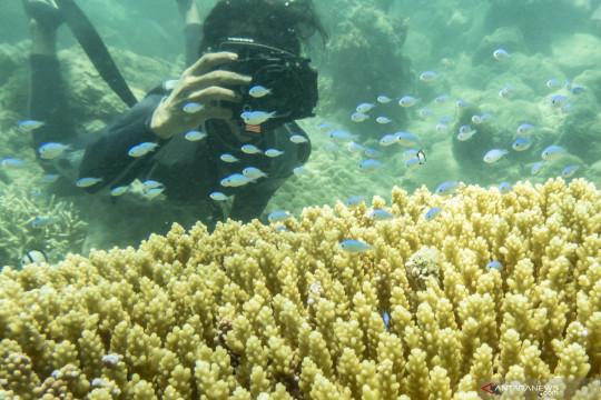 Wisata bawah air di Pulau Natuna