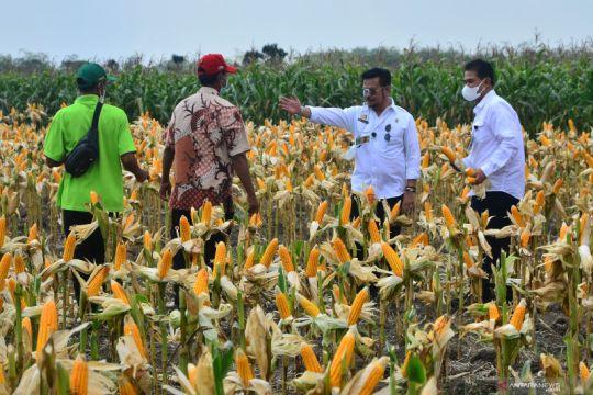 Mentan ajak masyarakat aktif perkuat ketahanan pangan