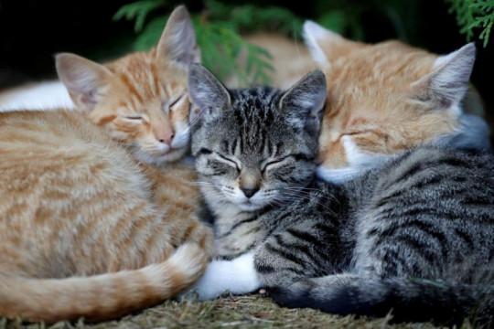Pemusnahan kucing akibat COVID-19 di China bikin marah warganet