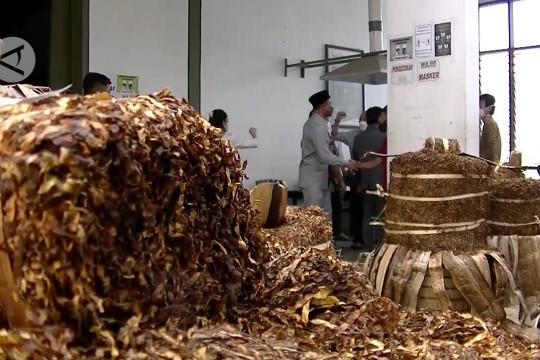 Pabrikan diminta percepat penyerapan dan naikkan harga tembakau