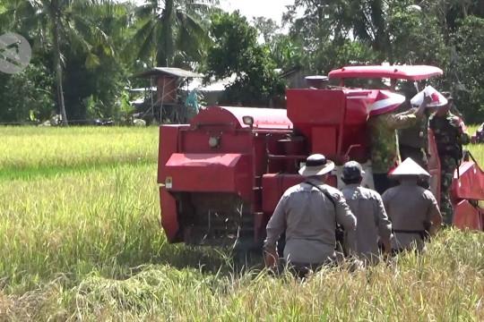 Tahun 2021 produksi padi Kalsel tetap surplus