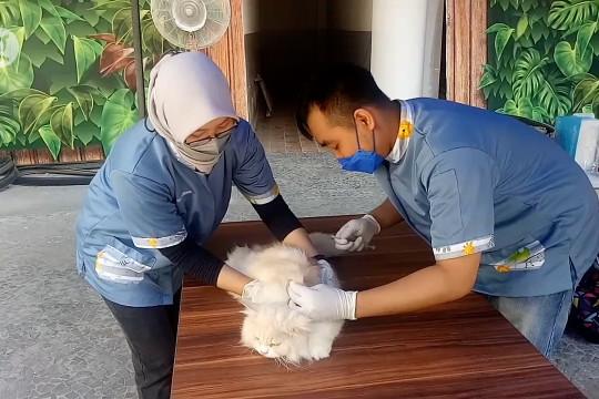 Hari Rabies Sedunia, Tangerang gelar vaksinasi rabies massal