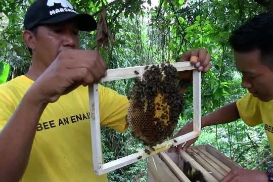 Ridwan Kamil luncurkan lebah madu petani milenial