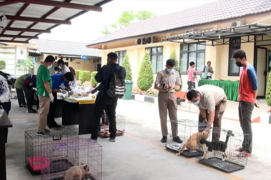 Vaksinasi dan sterilisasi bagi 74 hewan peliharaan di Palangka Raya