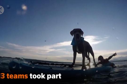 Keseruan kontes anjing dan pemilik di pantai Kroasia