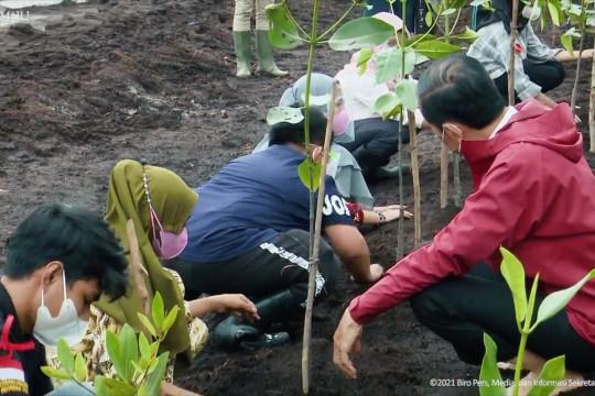 Pemerintah targetkan rehabilitasi 34 ribu ha hutan mangrove di 2021