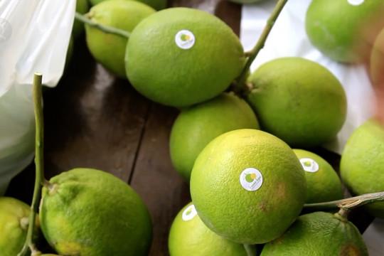 Budi daya lemon organik, ladang rupiah di masa pandemi