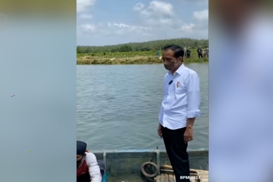 Gunakan perahu dayung, presiden tanam mangrove di Cilacap