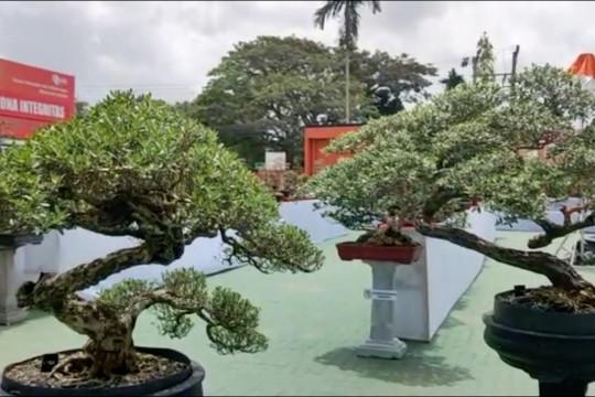 Basarnas Kendari buka peluang usaha baru melalui kontes bonsai