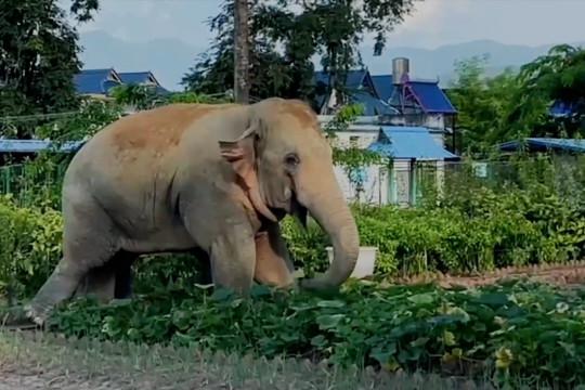 Tiga gajah liar sambangi kantor polisi di Yunnan, China