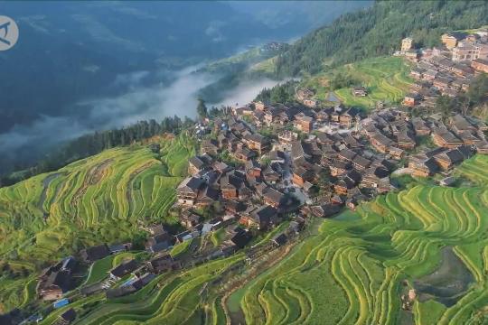 Melihat pemandangan musim panen padi dari udara di Guizhou