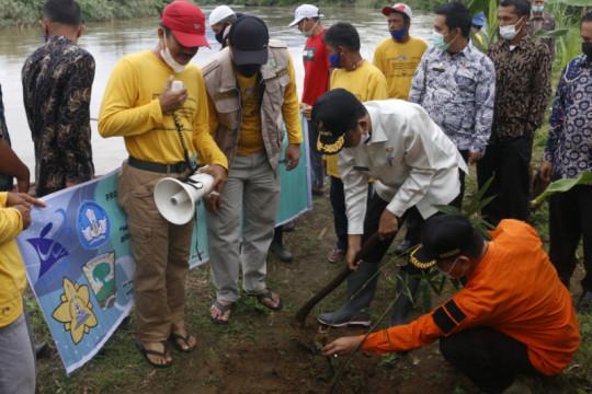 Pemkab Pasaman Barat tanam bambu antisipasi dampak banjir Batang Saman