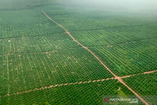 Pemerintah perkenalkan Strategi Jangka Benah guna tata sawit di hutan