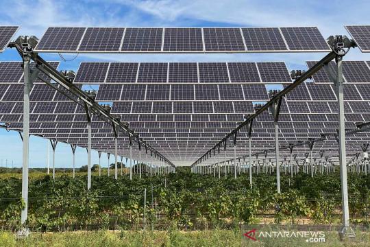 Penggunaan panel surya di perkebunan anggur Pierre Escudie