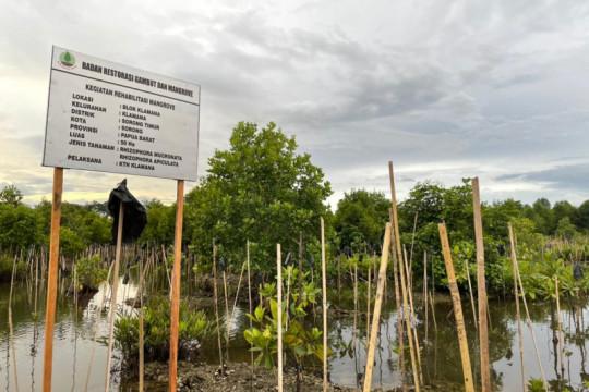 BRGM bantu bibit mangrove, tingkatkan pendapatan warga Papua