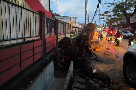 Depok kerahkan 150 petugas guna mendata kondisi pohon di sekitar jalan