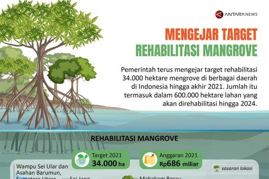 Mengejar target rehabilitasi mangrove