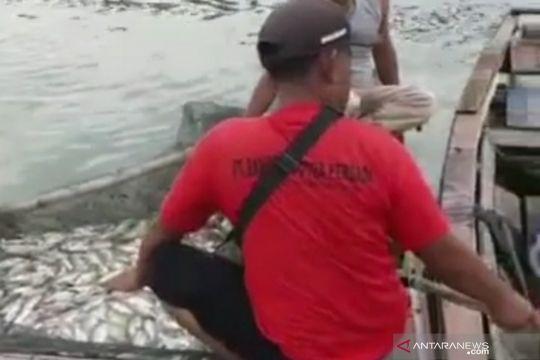 Jutaan ekor ikan di Waduk Cirata mati akibat air hujan kiriman