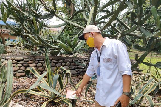 Peneliti beri 5.000 KTP Pohon di Kebun Raya Bogor
