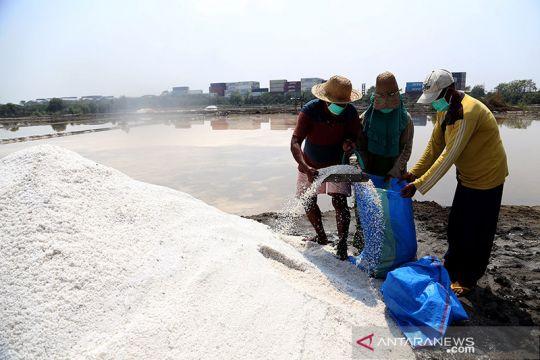 Pemkot Surabaya-DKPP sinergi tingkatkan kualitas produksi garam petani