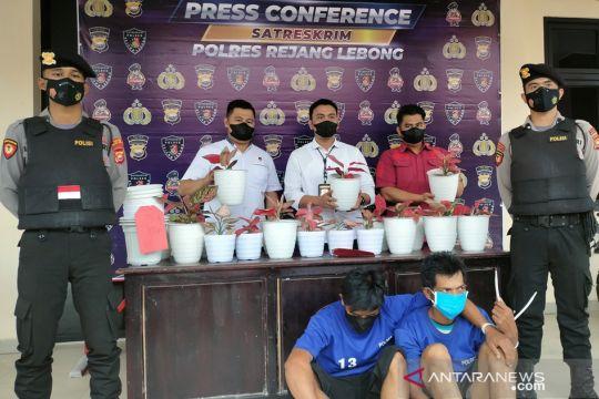 Polisi tangkap pencuri spesialis tanaman hias