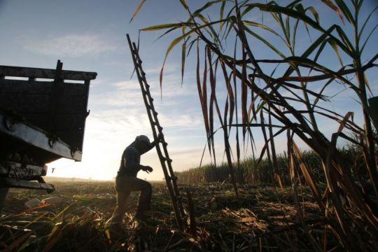 PT RNI ajak milenial jadi petani tebu bantu transformasi industri gula
