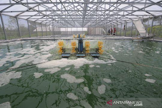 Budi daya alga untuk ekspor Amerika Serikat dan Rusia