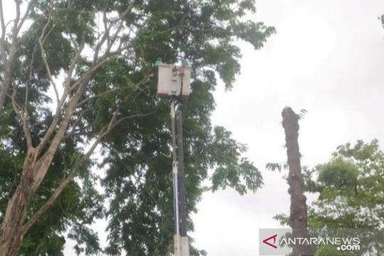 DLHK Denpasar pangkas pohon perindang cegah tumbang saat musim hujan