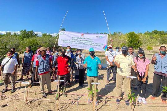 PLN gandeng Pemkab Sikka tanam 2.000 bibit pohon bakau