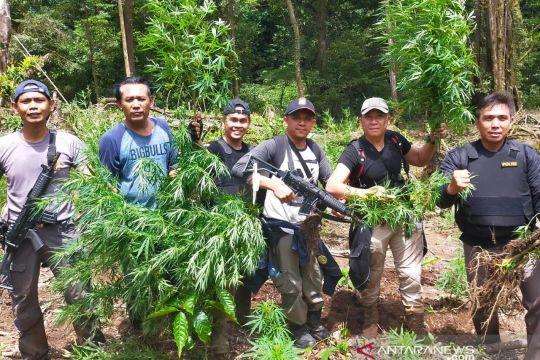 Polisi cari pemilik ladang ganja 1,5 hektare di Rejang Lebong
