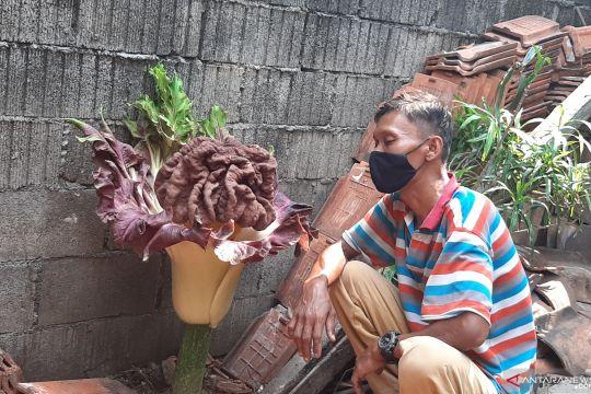 Petugas lihat tanaman mirip bunga bangkai di halaman rumah warga